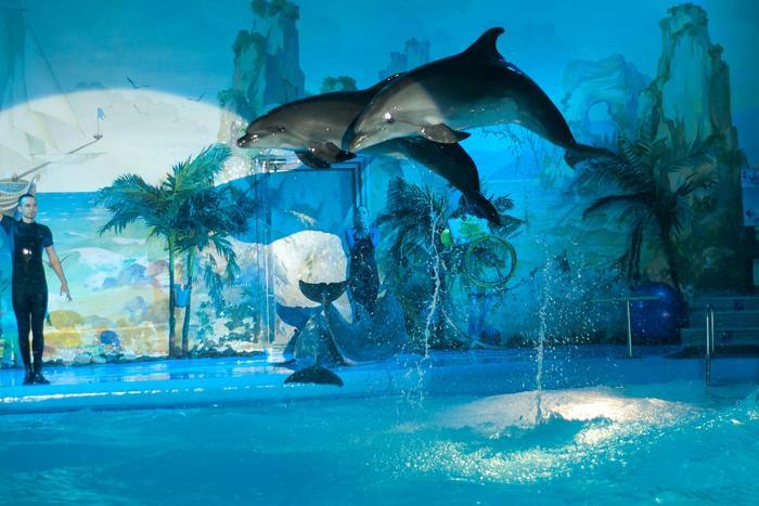 Сеть дельфинариев Нэмо
